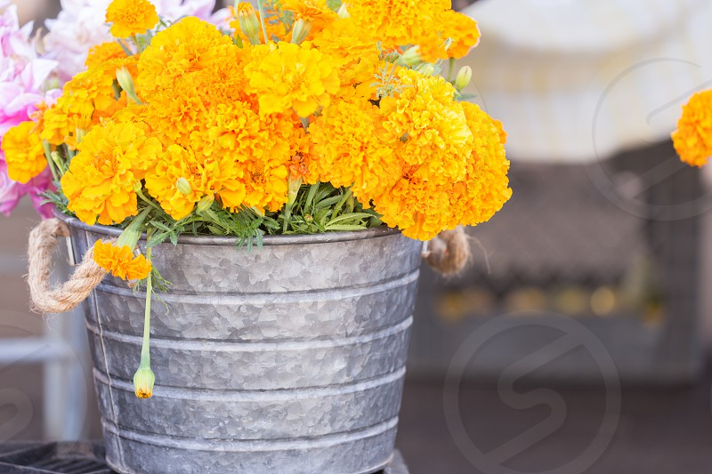 A bucket of bright orange marigolds at a farmers market photo
