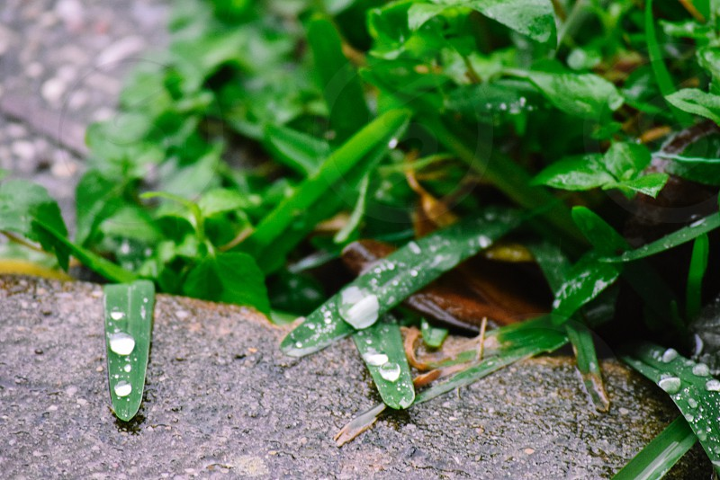 Greengrass  photo