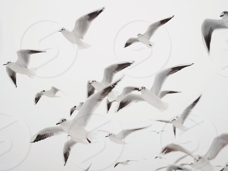 Gulls flying at the beach sky In winter. Minimalism photo