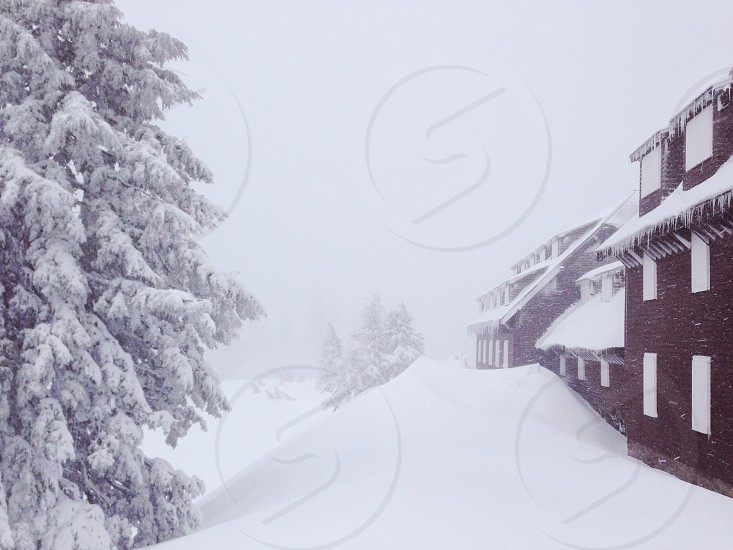 snow road beside tree view photo