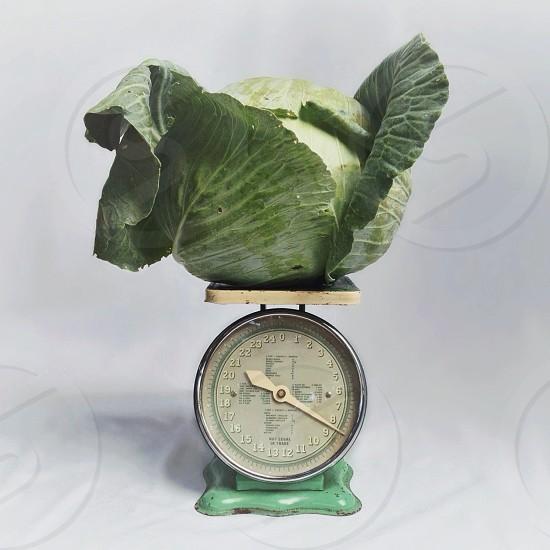 cabbage green garden scale vintage kitchen vegetable weigh farm harvest weight head round retro mint green photo
