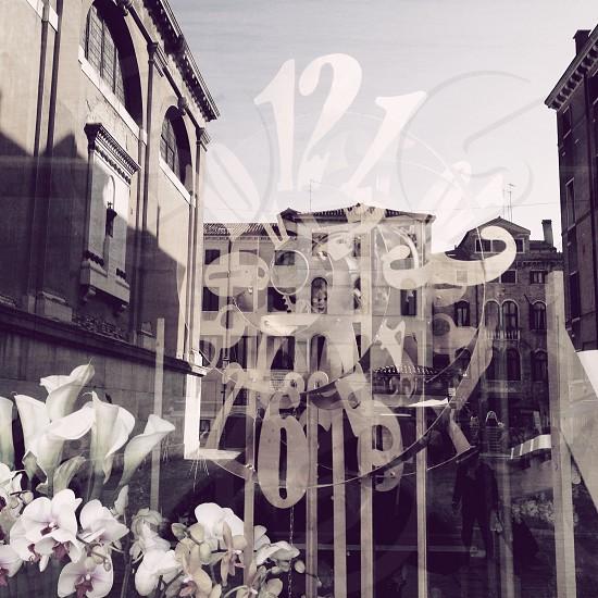 white flower beside glass window photo