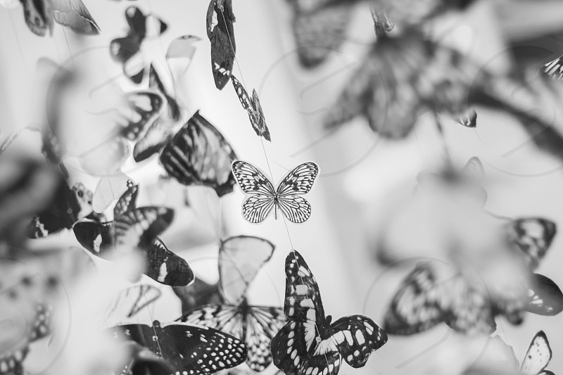 white and black photo of butterflies photo