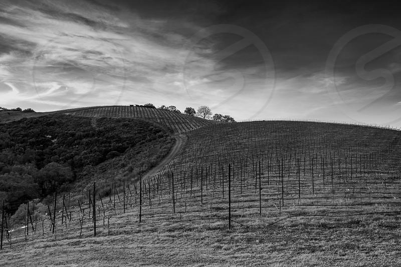 Winery; vineyard; farm; grapes; California; paso Robles photo