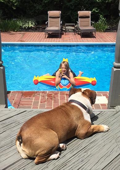 Summer pool bulldog fun water fight great protector  photo