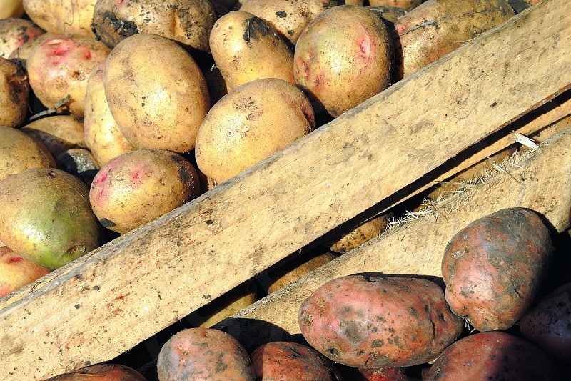 potatoes on wooden cart photo