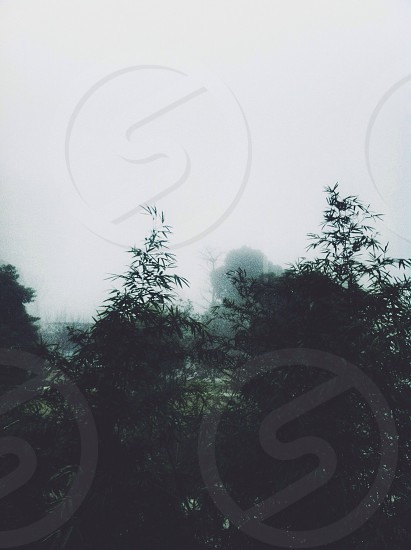 Fog in the tree photo