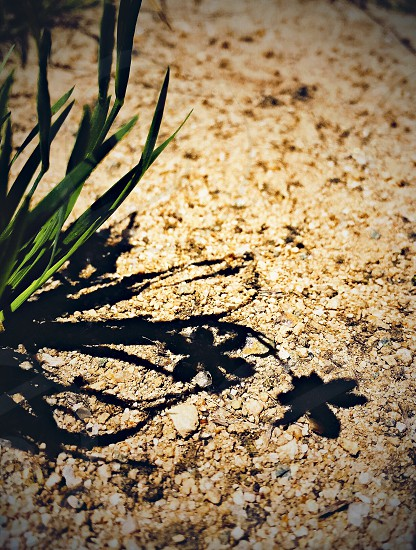 shadowflower photo