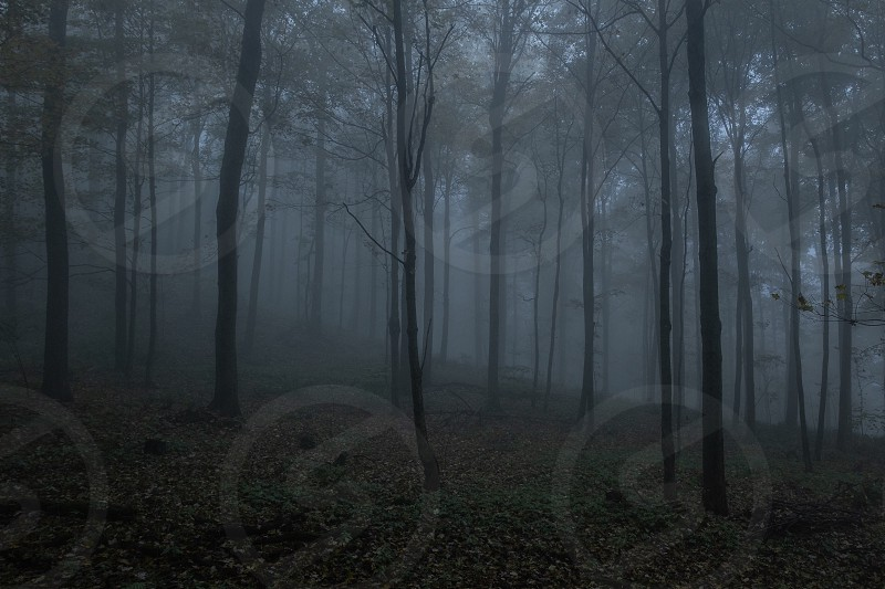 Foggy secluded forest  photo