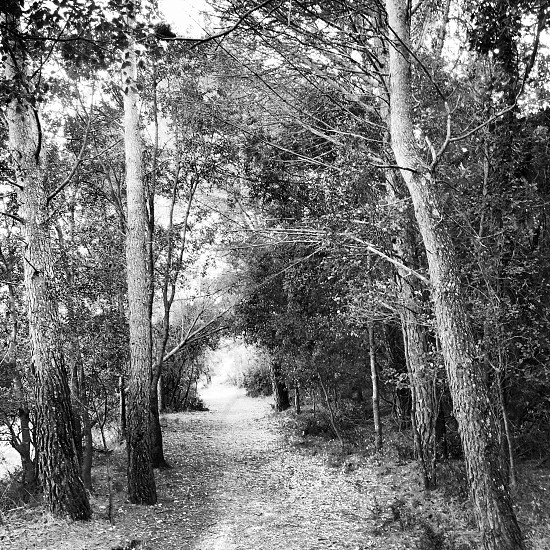 pathway in between trees grayscale nature photography  photo