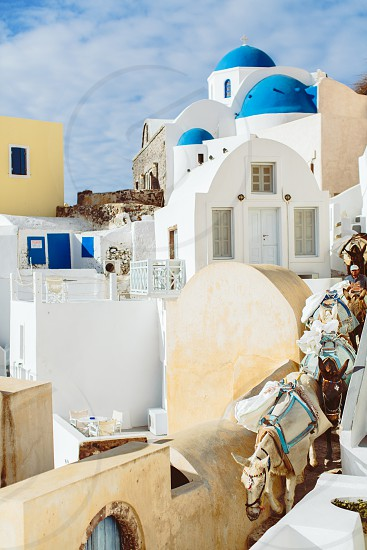 Oia santorini greece europe donkey animal architecture church orthodox blue sky sun summer day stairs travel destination wedding yellow photo