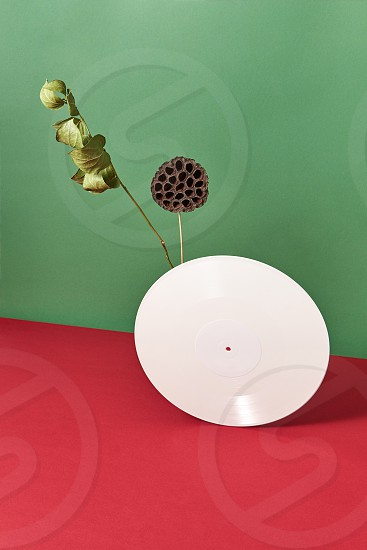 A round retro vinyl record a dry branch and a bud on a double green red background with copy space. photo