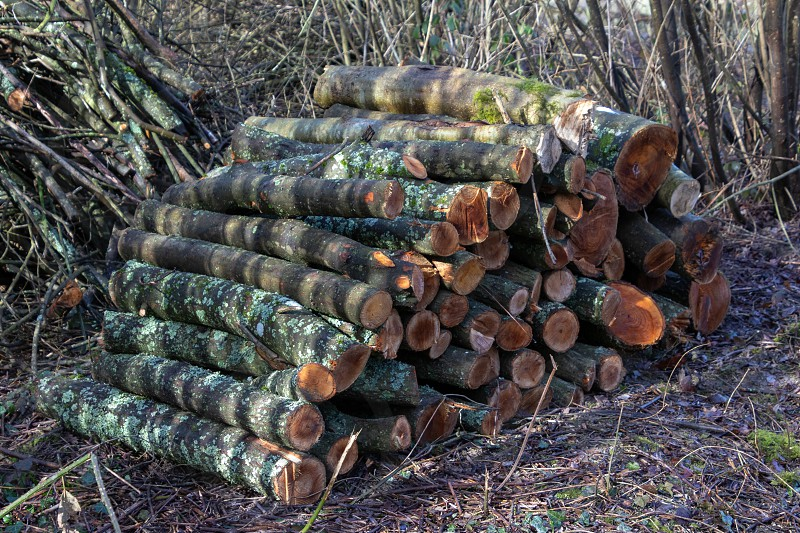 Stack of freshly sawn logs by Ardingly Reservoir photo