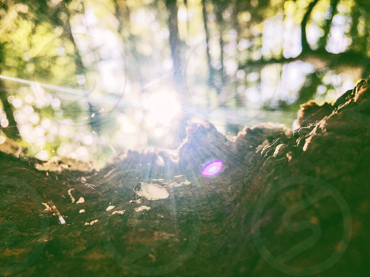Sunrise tree woods light photo