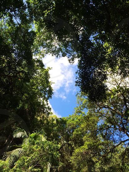 Rainforest treetops photo