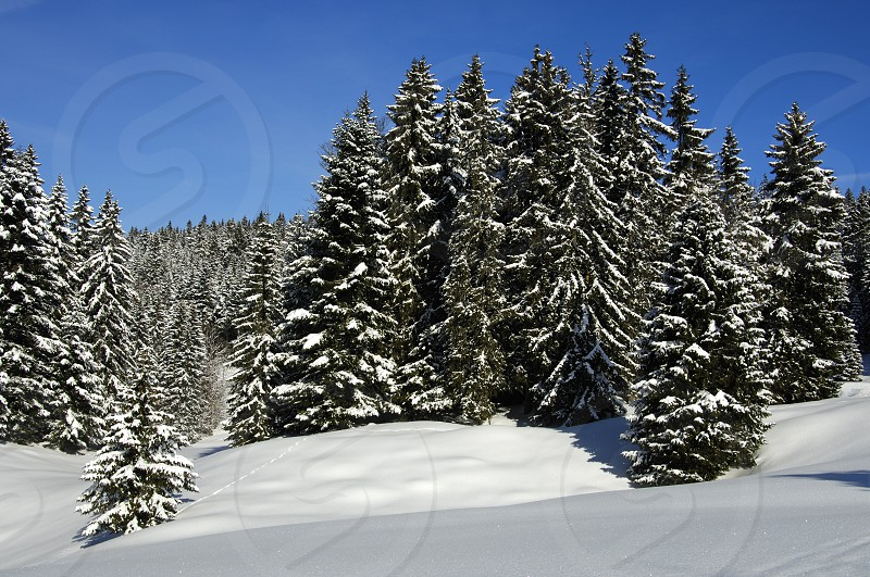 Winter landscape with snow-covered forest in the Jura region Switzerland photo