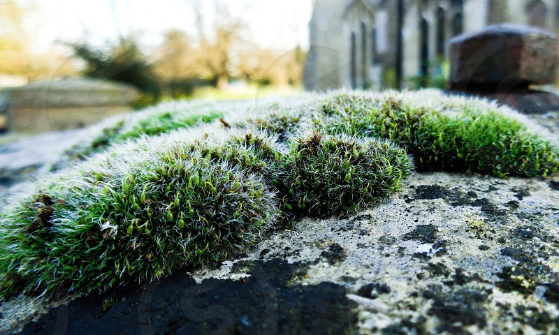 Moss green greenery growth seeds dew weeds stone church macro sunshine sun morning photo