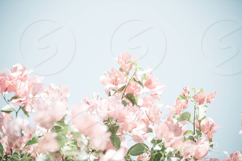 Paper like petal flowers bright and light pastel flowers photo