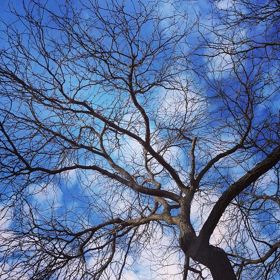 Autumn tree art photo