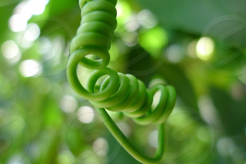 green spiral stemmed plant photo