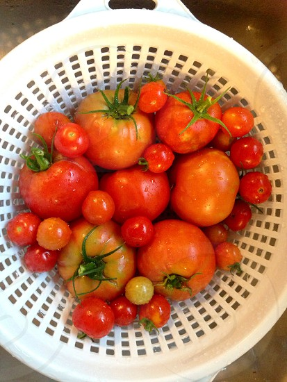 Fresh from our square foot garden! photo