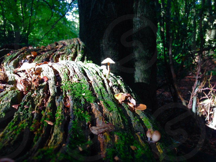 Walk in the woods  photo