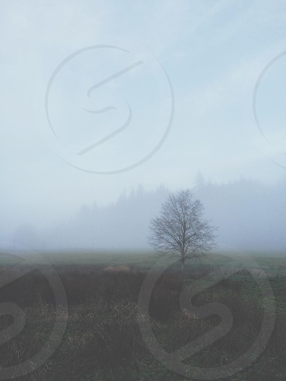 tree on a foggy view photo