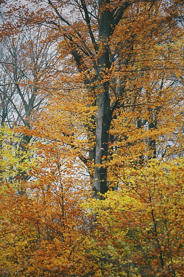 Tree forest fall autumn yelllow nature photo