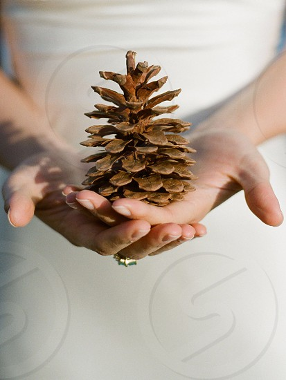 Pine cone fall white hands nature photo