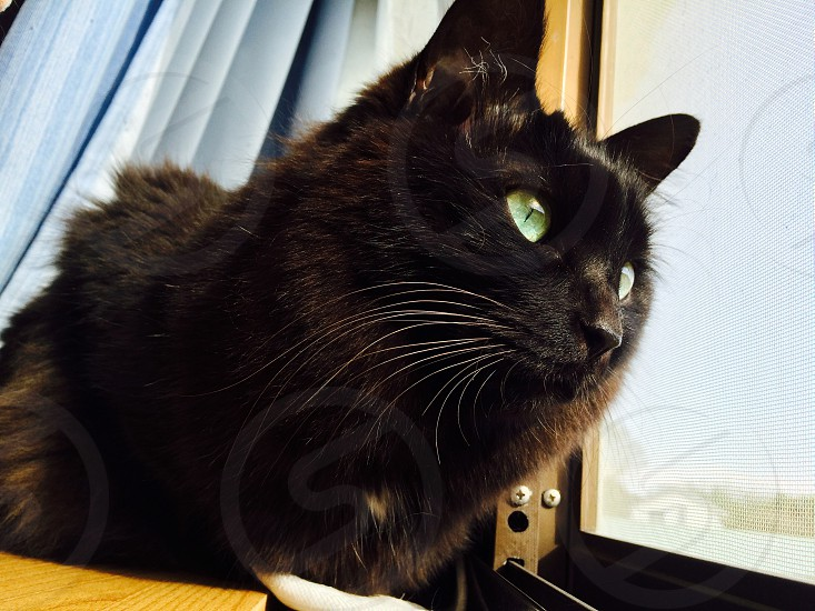 black cat facing window photo