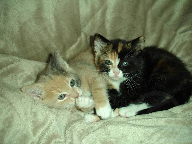 Kitten sisters photo