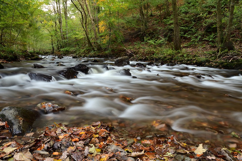 Long exposure of the river flowing through the woods at Watersmeet in Devon photo