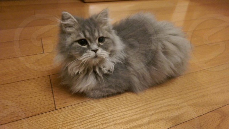 Mimi the cat photo