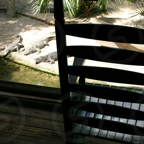 view of wooden armchair and three crocodiles photo