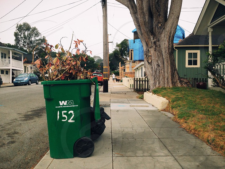 green garbage bin on curb with branches photo