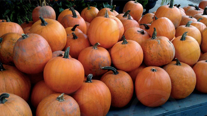 Pumpkins pumpkins every where.  photo