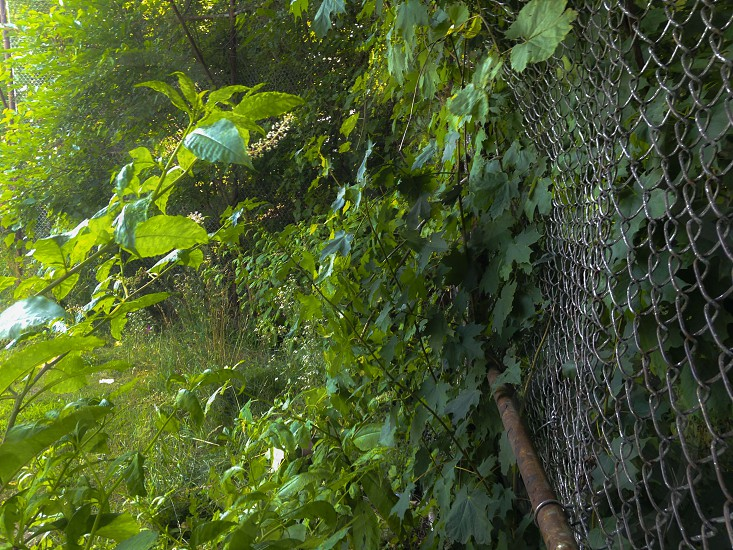 overgrowth on an old batting cage photo