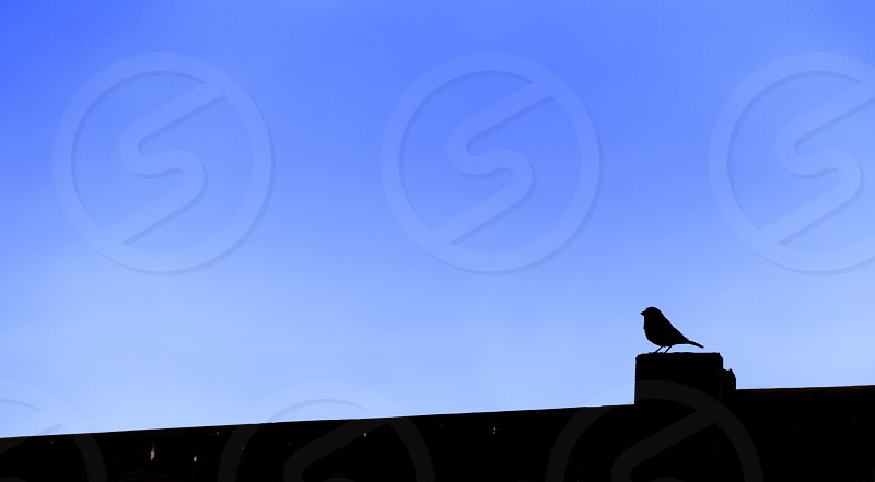 Silouette of the local sentry patrolling the fence (perimeter) photo