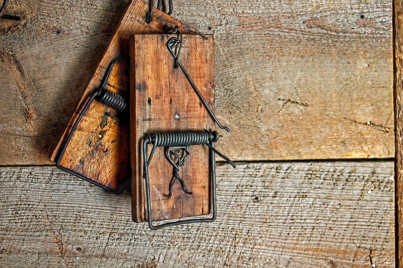 Close up of two old mouse traps hanging on a wooden wall. photo