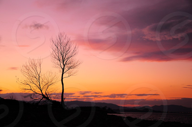 bare tree by beach under grey cloudy sky during orange sunset photo