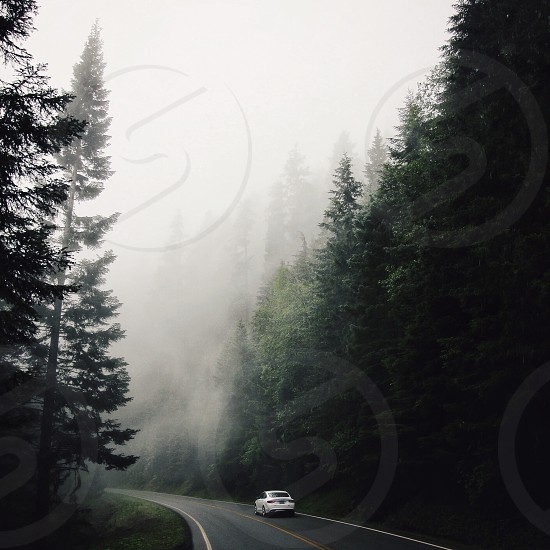 white car on road between green pine trees during daytime photo