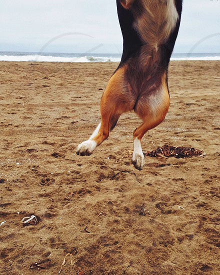 dog jumping on a sand photo