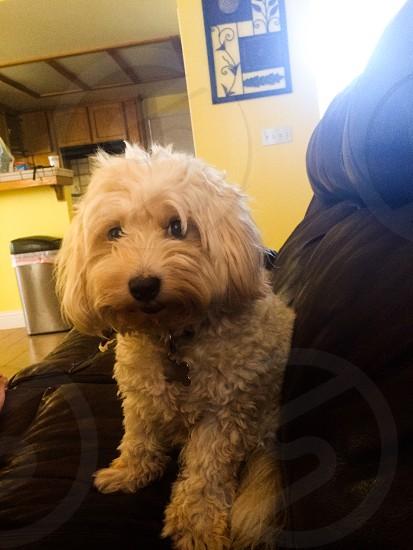 The pride dog photo