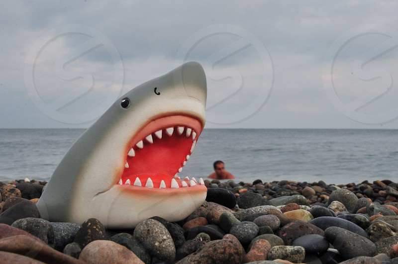 gray and white shark toy on rocks photo