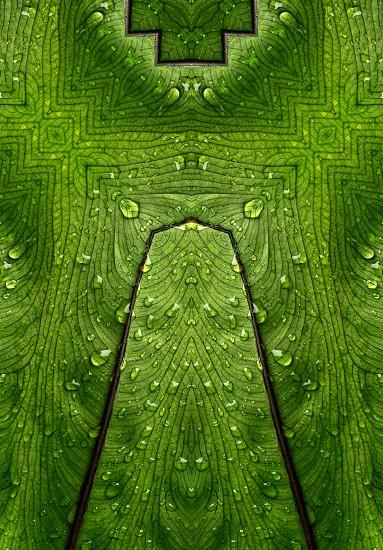 Kaleidoscope image of leaf of rainy season photo