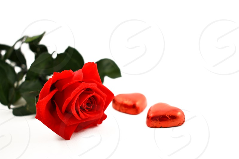 Red rose with chocolate candy. Romantic roses on a white background. Valentines Day concept photo