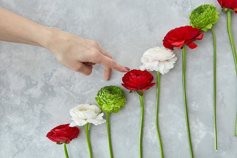 a composition of green chrysanthemum flowers pink and red roses on a gray concrete background. A female hand rises up in colors. Concept of Valentine's Day card photo