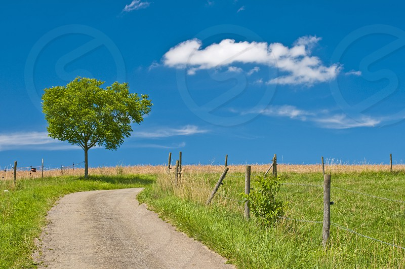 Way with single tree and blue sky with clouds photo