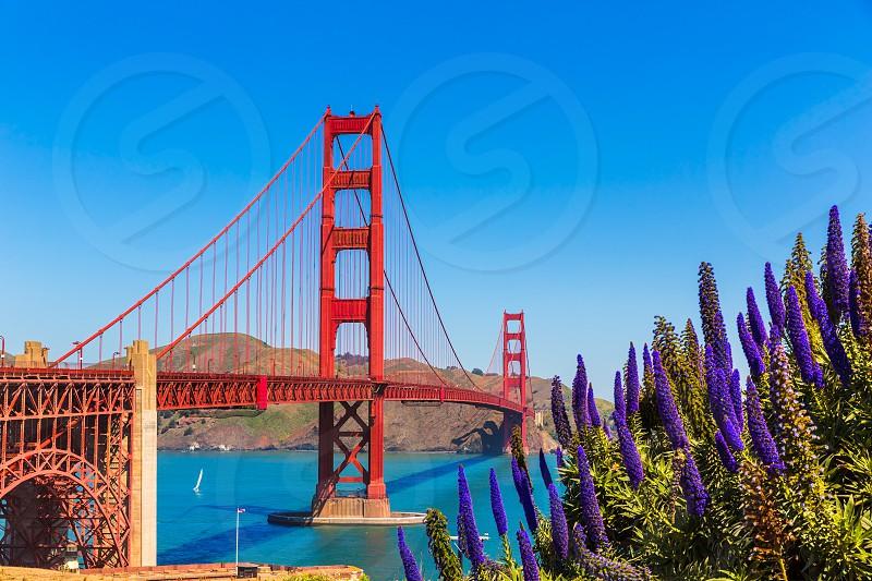 Golden Gate Bridge San Francisco purple flowers Echium candicans in California photo