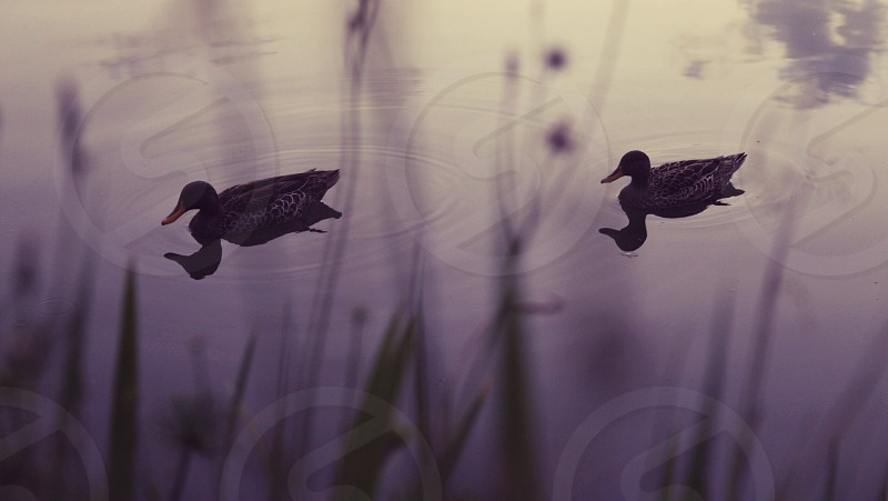 birds nature wildlife reflections silhouettes photo